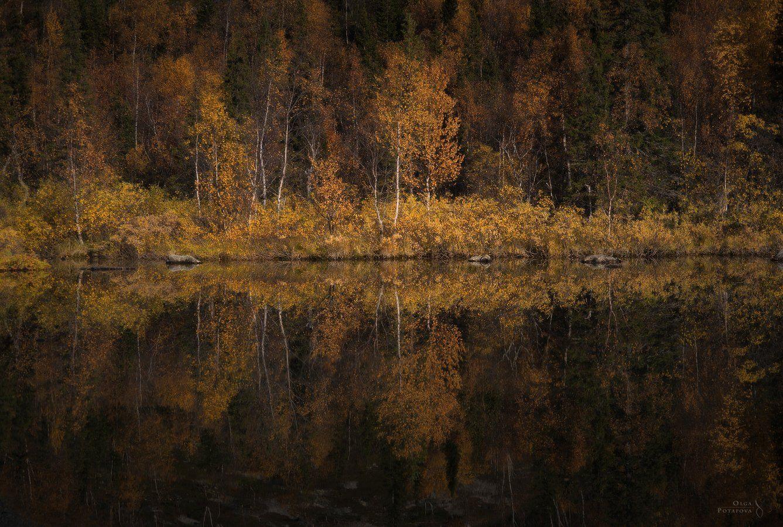 осень, заполярье, север, отражение, тайга, ловозёры, ловозерские тундры, кольский полуостров, сентябрь, Ольга Потапова
