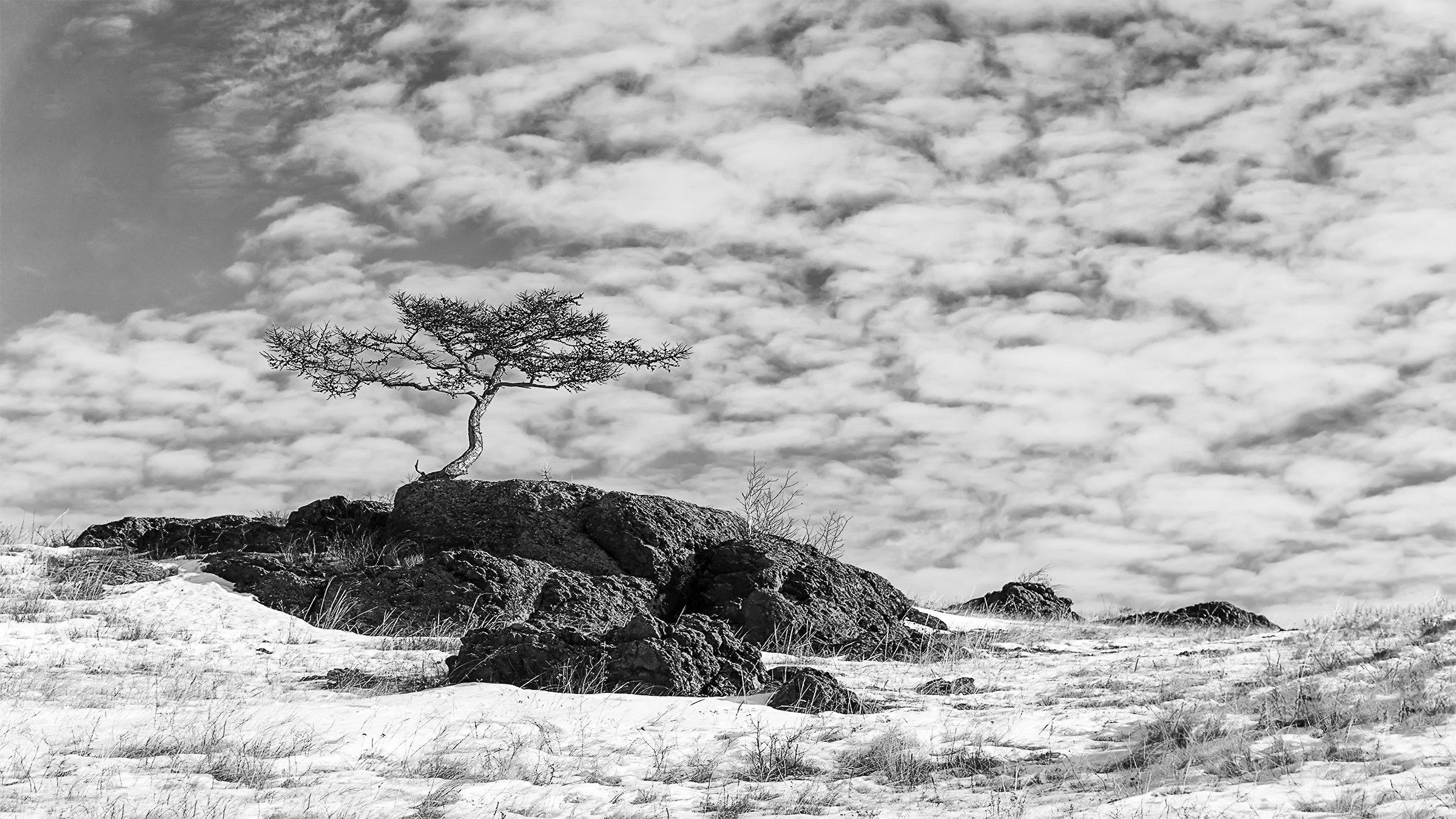 лиственница, дерево, скалы, небо, Леонид