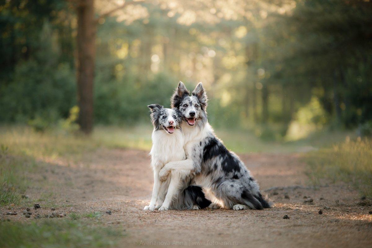 природа, собаки, Анна Аверьянова
