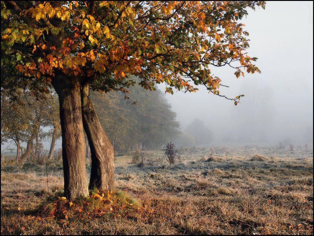 осень, утро, мороз, иней, деревья, туман, Владимир