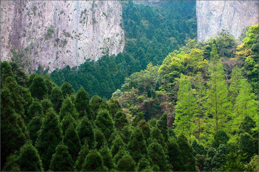 китай,лесной марш,янданшань, Александр Константинов