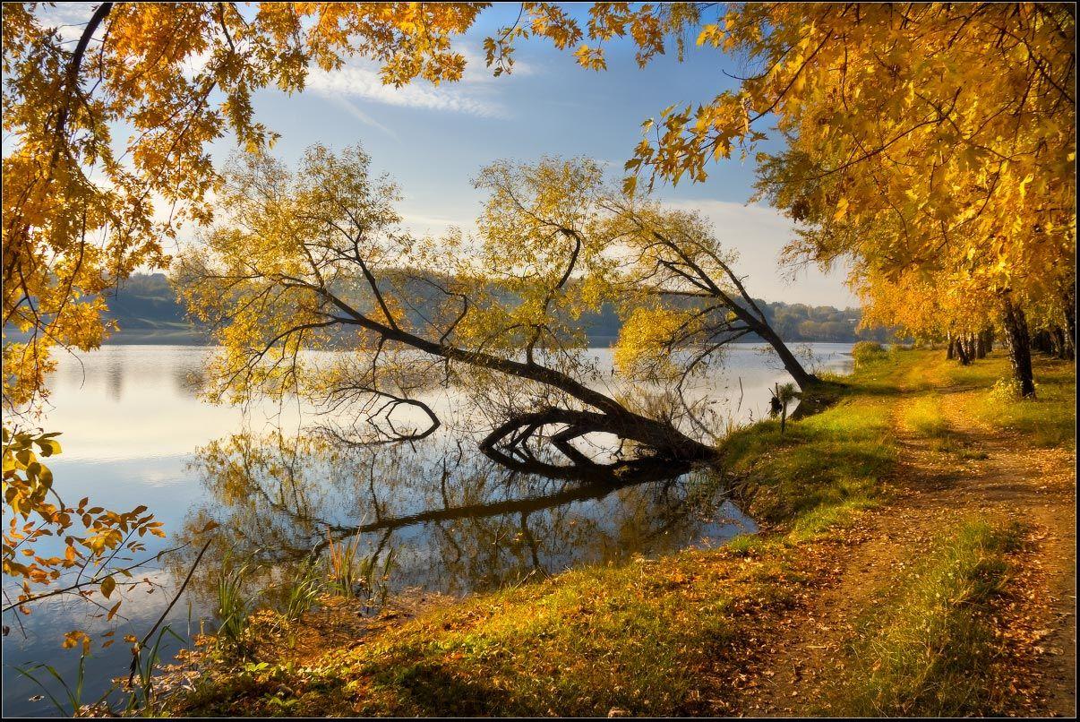 утро, осень, золотая, берег, люботин, харьковская, область, Александр Киценко