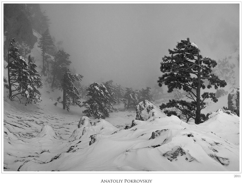 снег, зима, горы, крым, туман, анатолий покровский, Анатолий Покровский