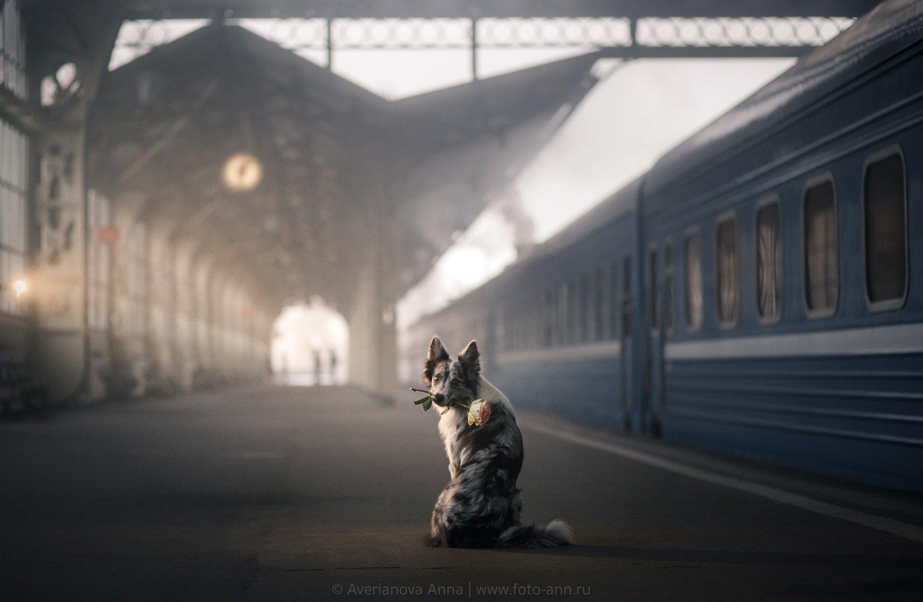 собака, вокзал, история, Анна Аверьянова