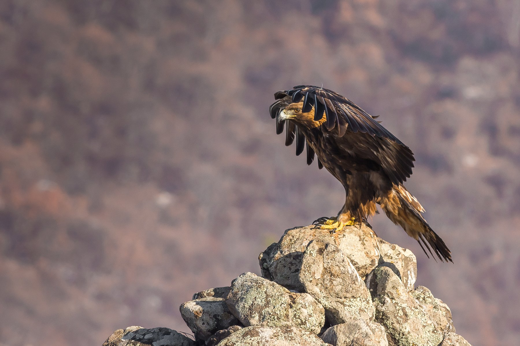 birds,winter,nature,lanscape,wildlife,fly,eaglemountain, Nikolay Nikolov