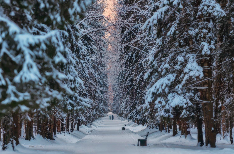 павловск, павловский парк, зима, питер, пейзаж, Таня She (Aiya)