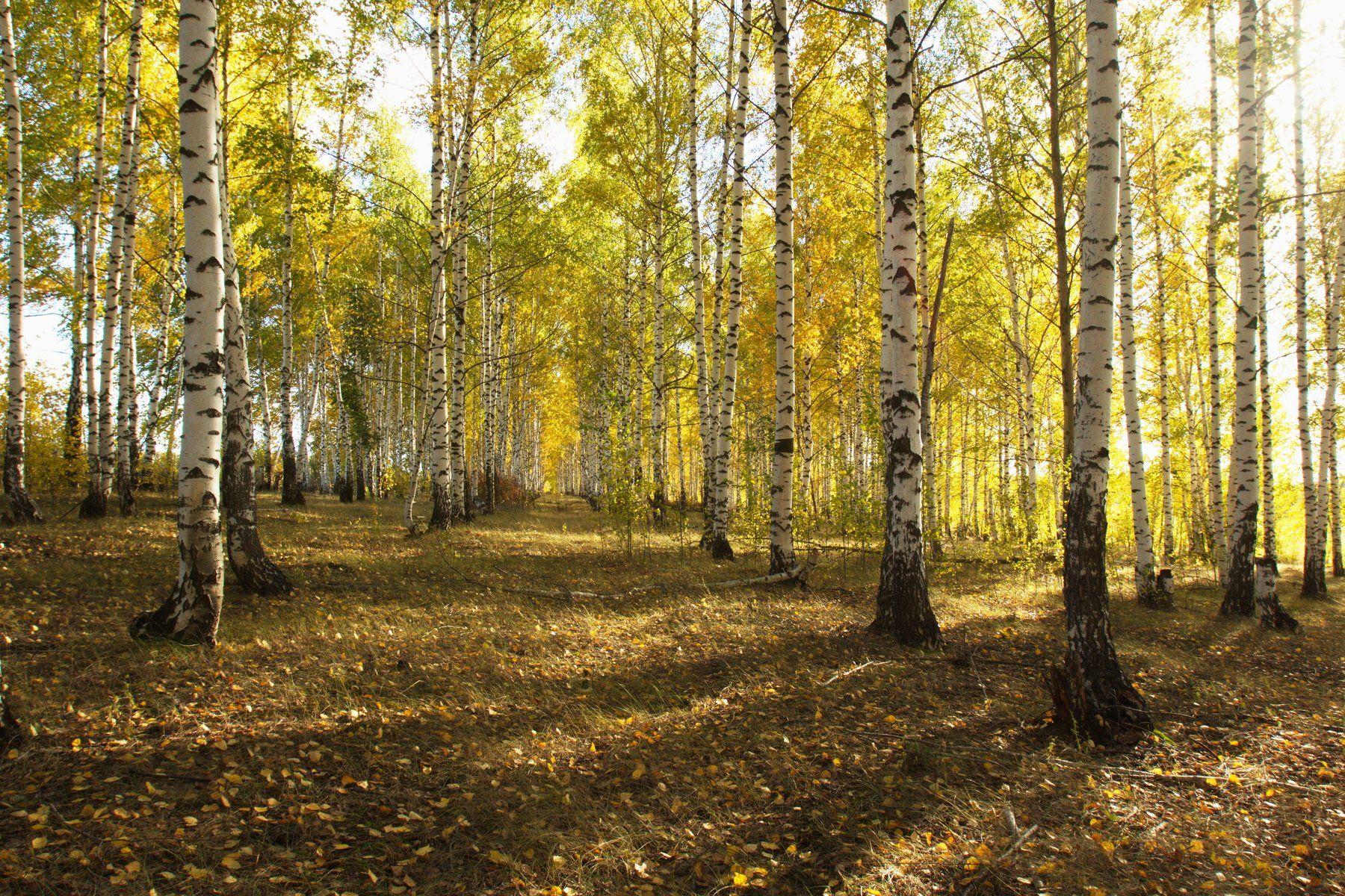 пейзаж осень лес, Каранов Николай