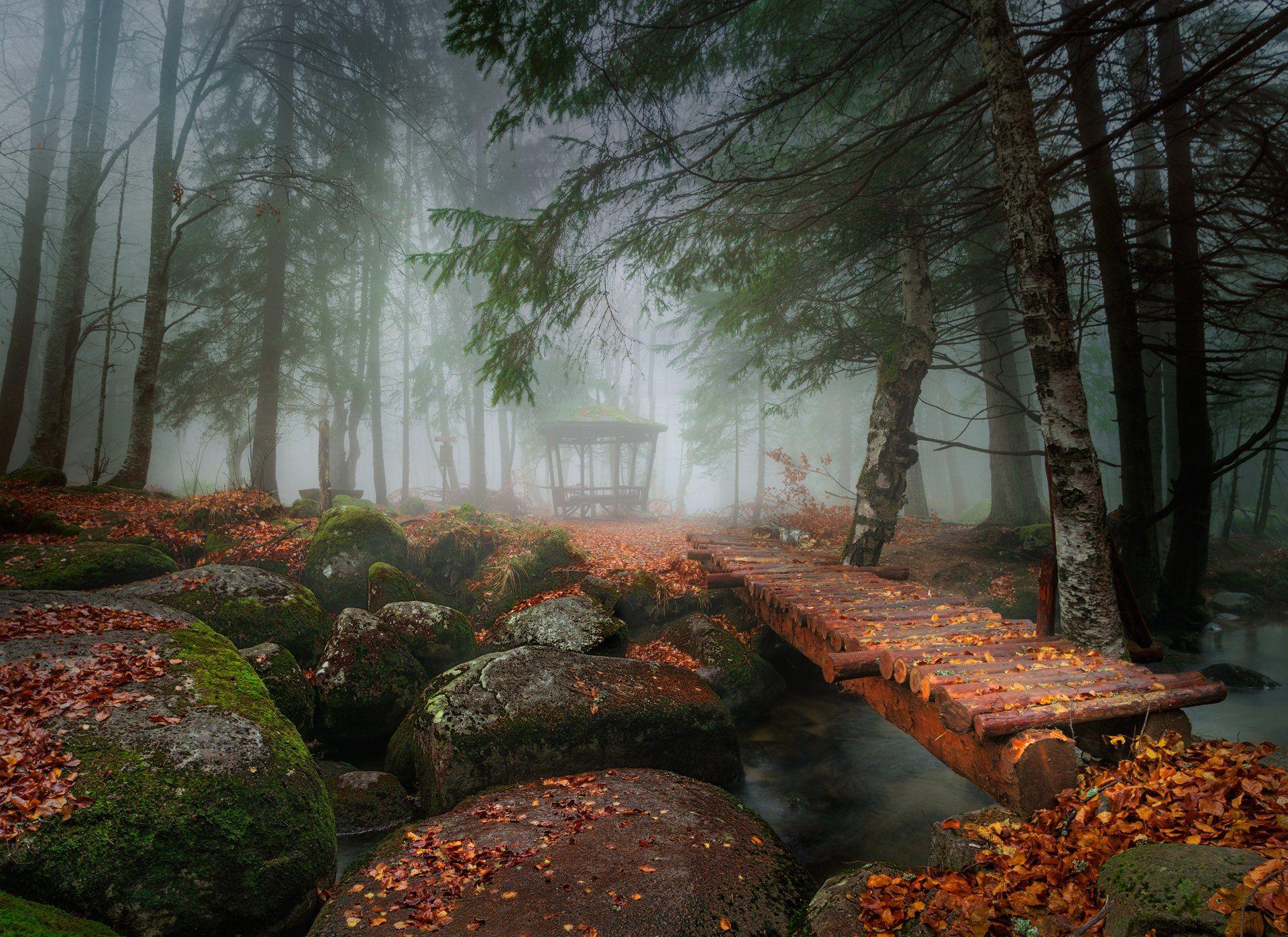 landscape nature autumn foggy scenery forest wood mountain vitosha bulgaria, Александър Александров