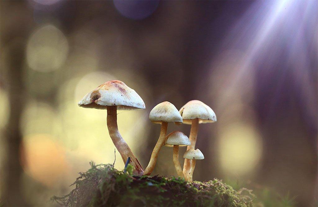 Грибы,лес,осень,солнце,свет,луч., Виктор Шнайдер