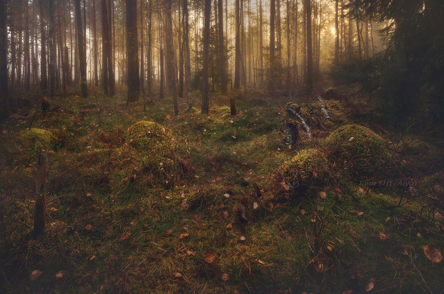 рассвет, пейзаж, утро, лес, landscape, туман, Таня She (Aiya)