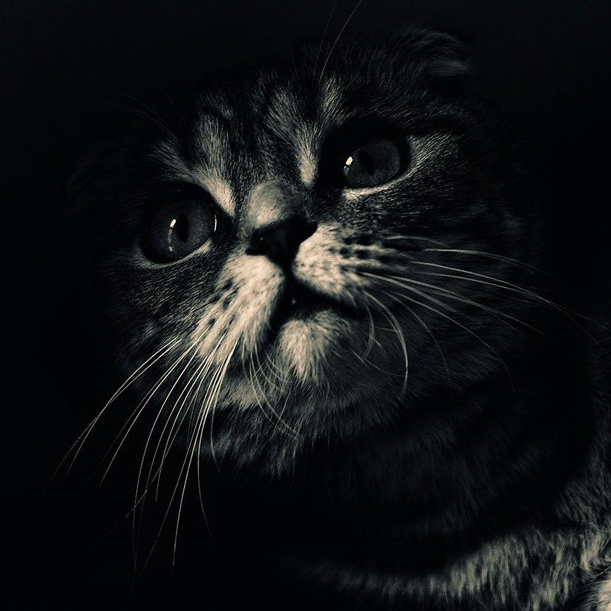 коты, кошки, кот, кошка, Олег Скворцов