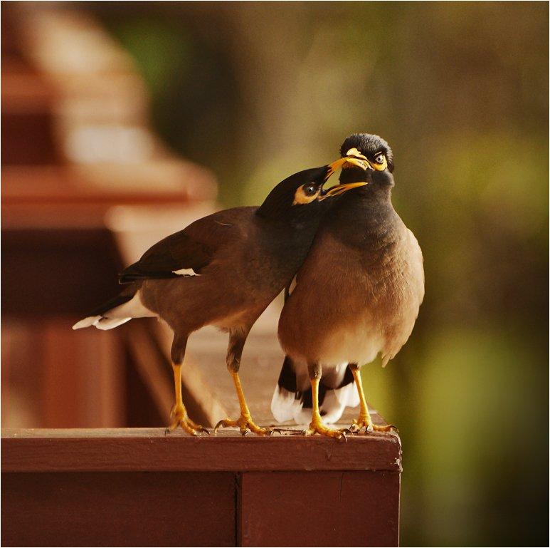 таиланд, птицы, семья, Сергей Гаспарян