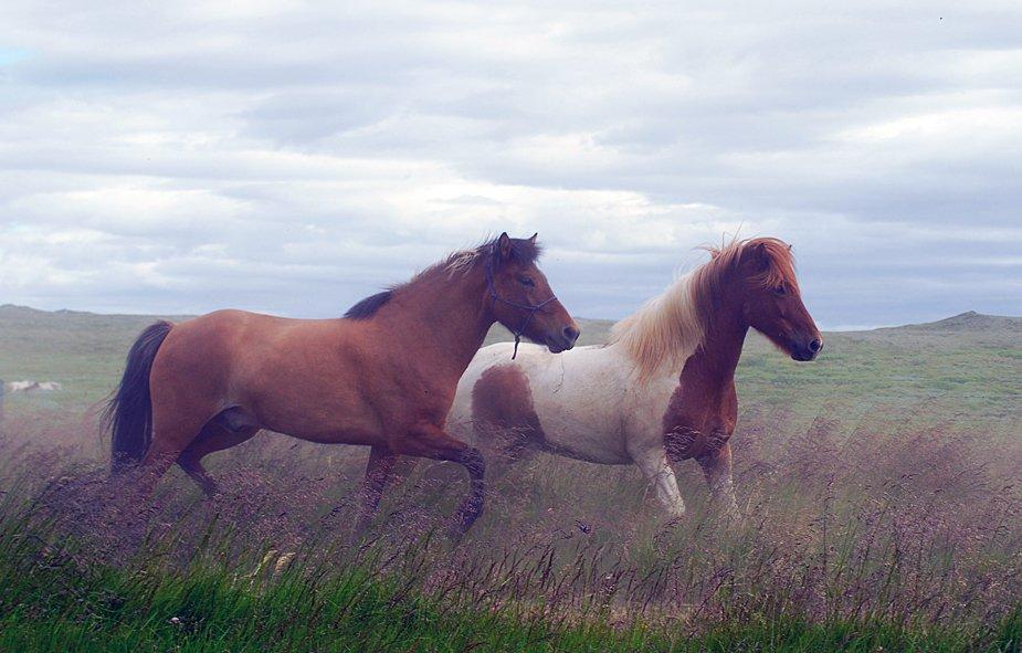 лошади, Ксения