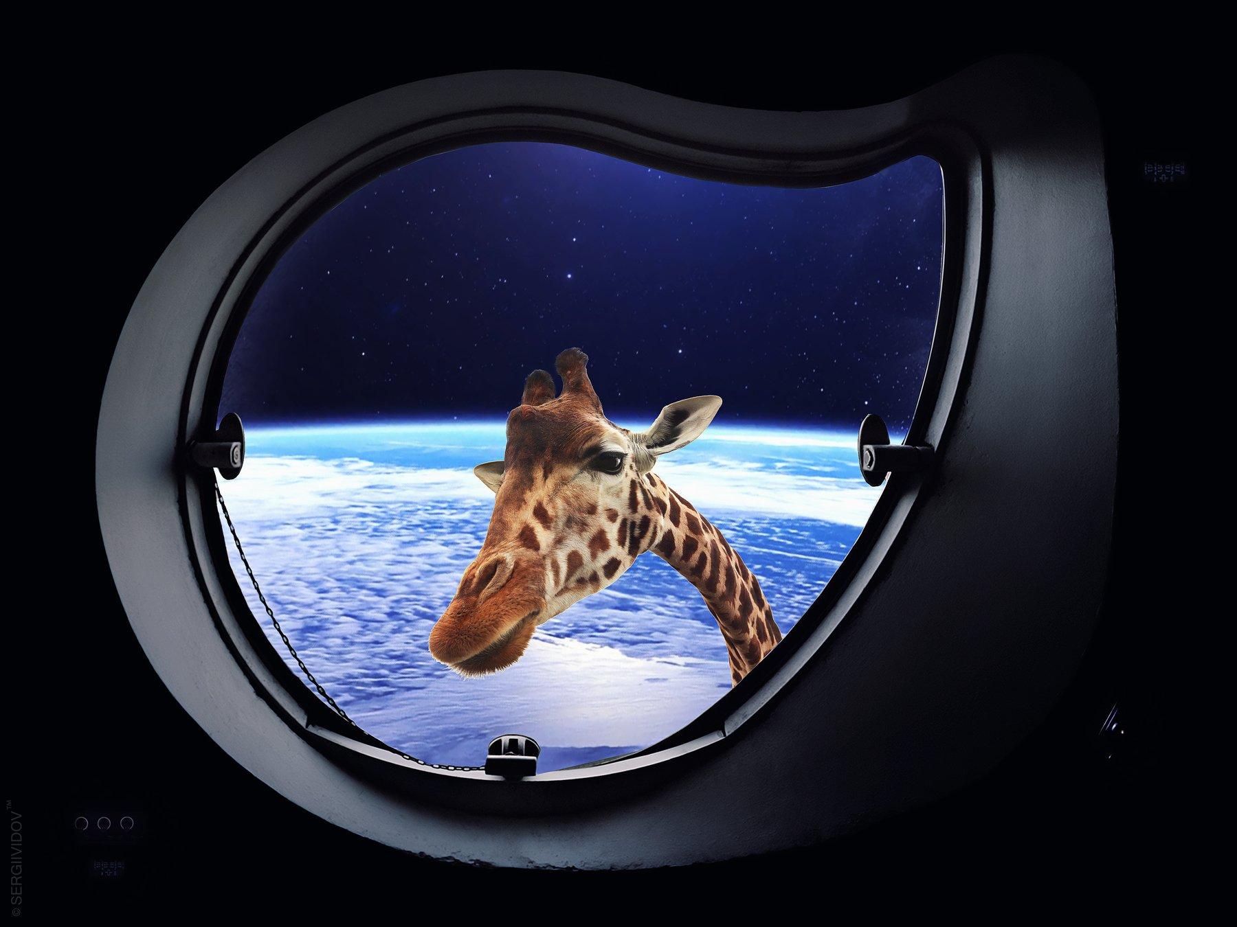 космос, коллаж, жираф, иллюминатор, Sergii Vidov