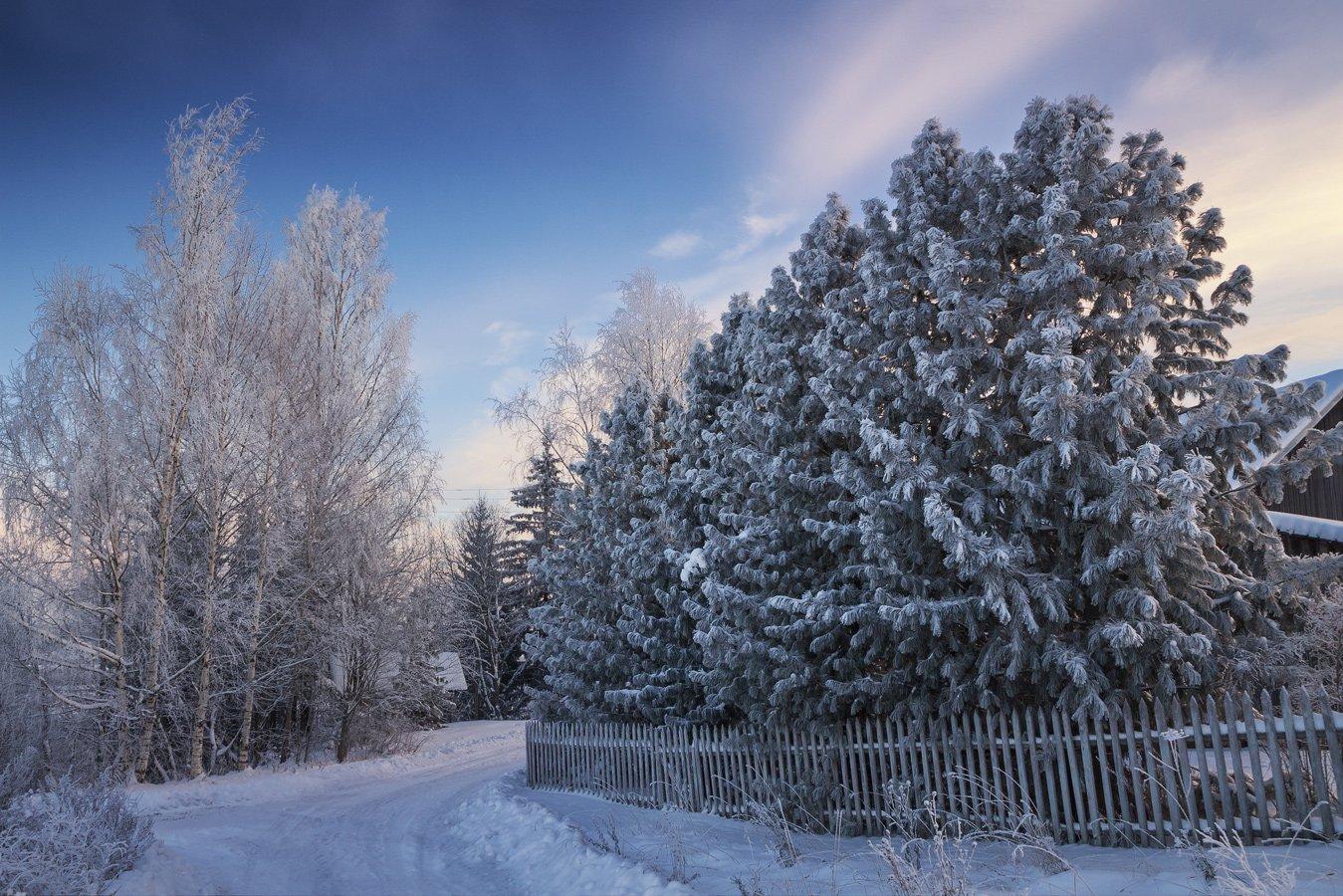 ноябрь, снег, мороз, кедр, солнечно, день., Смольский Евгений