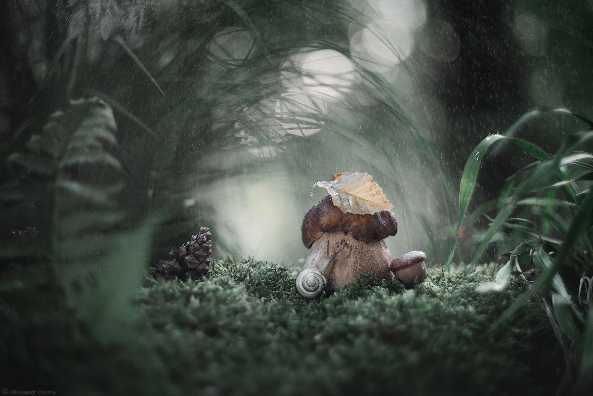 украина, коростышев, таинственные миры, гармония, загадочный, лето, лес, дождь, природа, красота, макро, макро мир, макро-красота, макро истории, цвета, зеленый, улитка, шишка, умиротворение, лесная сказка, вечер, боке, трава, мох,, Александр Чорный