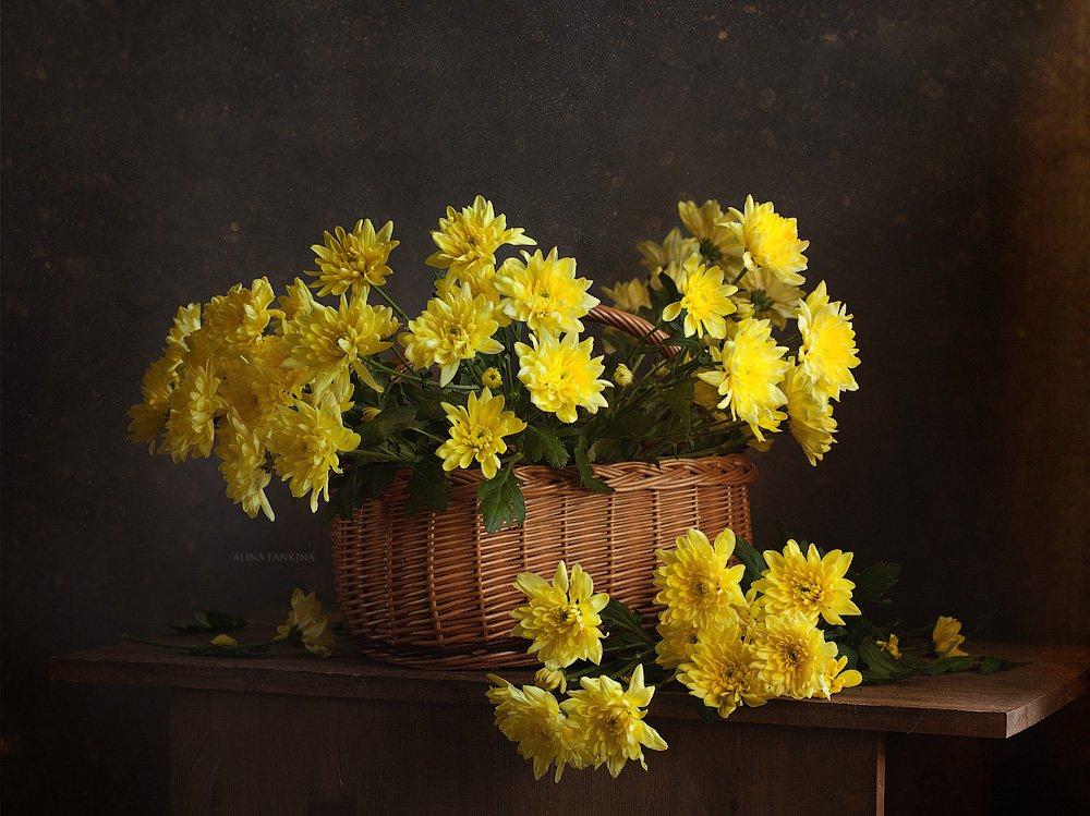 натюрморт, фотонатюрморт, цветы, свет, букет, корзина, хризантемы, желтые цветы, желтые хризантемы, алина ланкина, настроение, Алина Ланкина