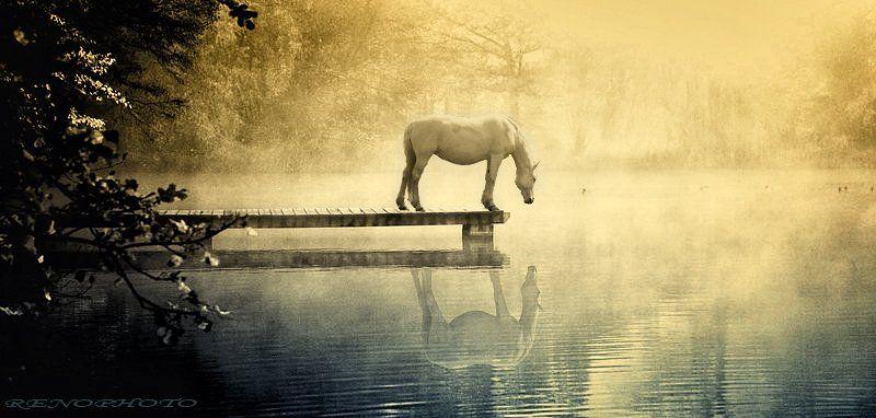 horse, Andrey Vahrushew