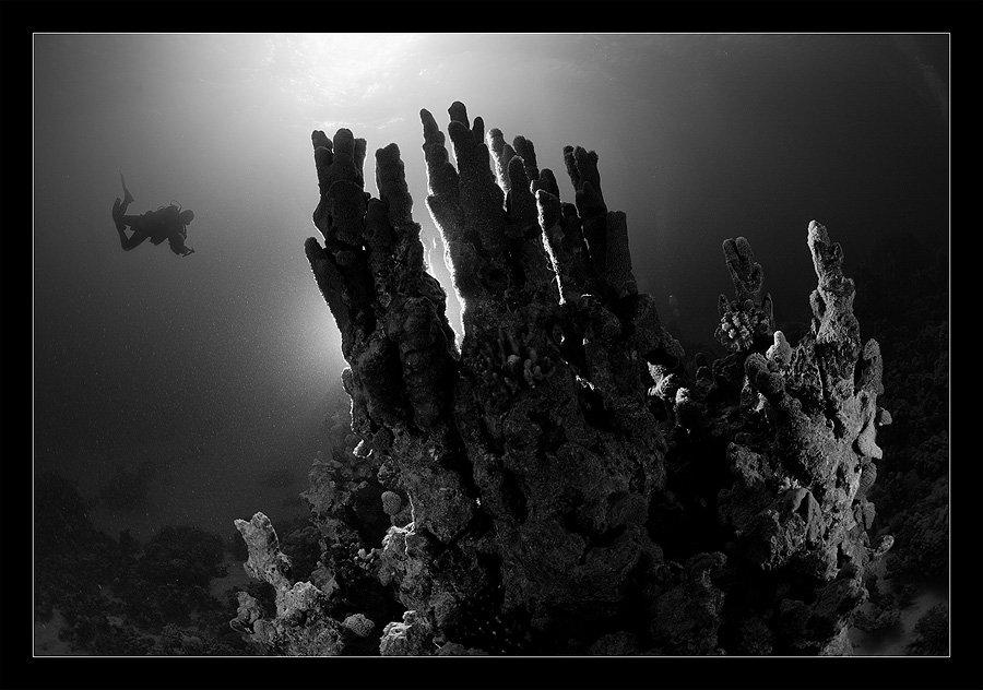 свет, коралл, солнце, вспышка, контровик, Нарчук Андрей
