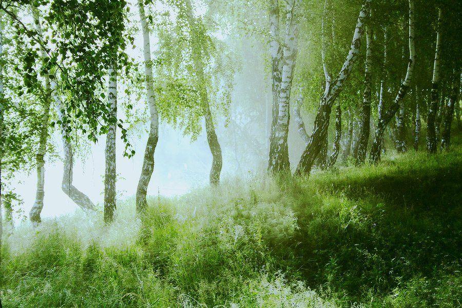 утро, берёзы, туман, Николай Морский