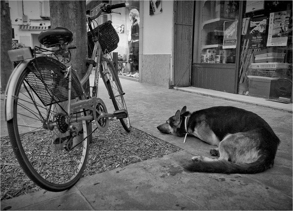 улица, велосипед, собака, ожидание, верность, Сергей Гаспарян