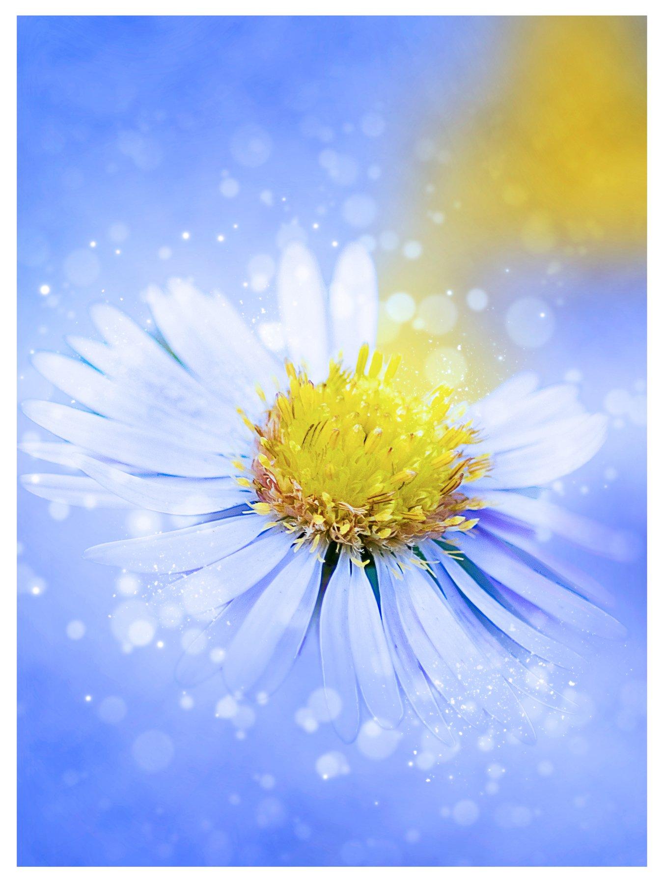 цветок, лепесток, голубой, желтый, Sergii Vidov
