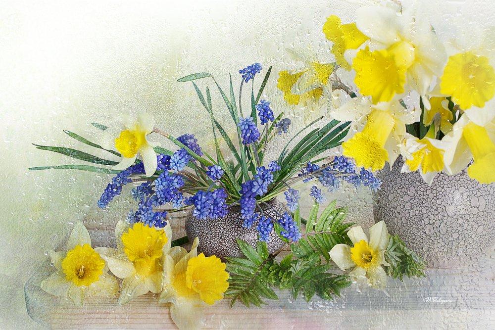 весна, перво цветы, нарциссы, натюрморт ,, Вера Александровна Павлухина