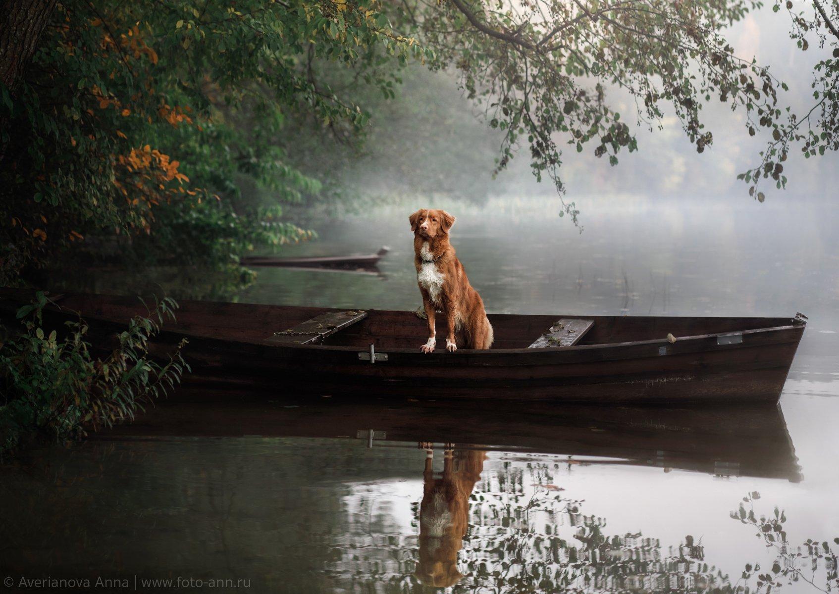 собака, природа, утро, туман, озеро, Анна Аверьянова