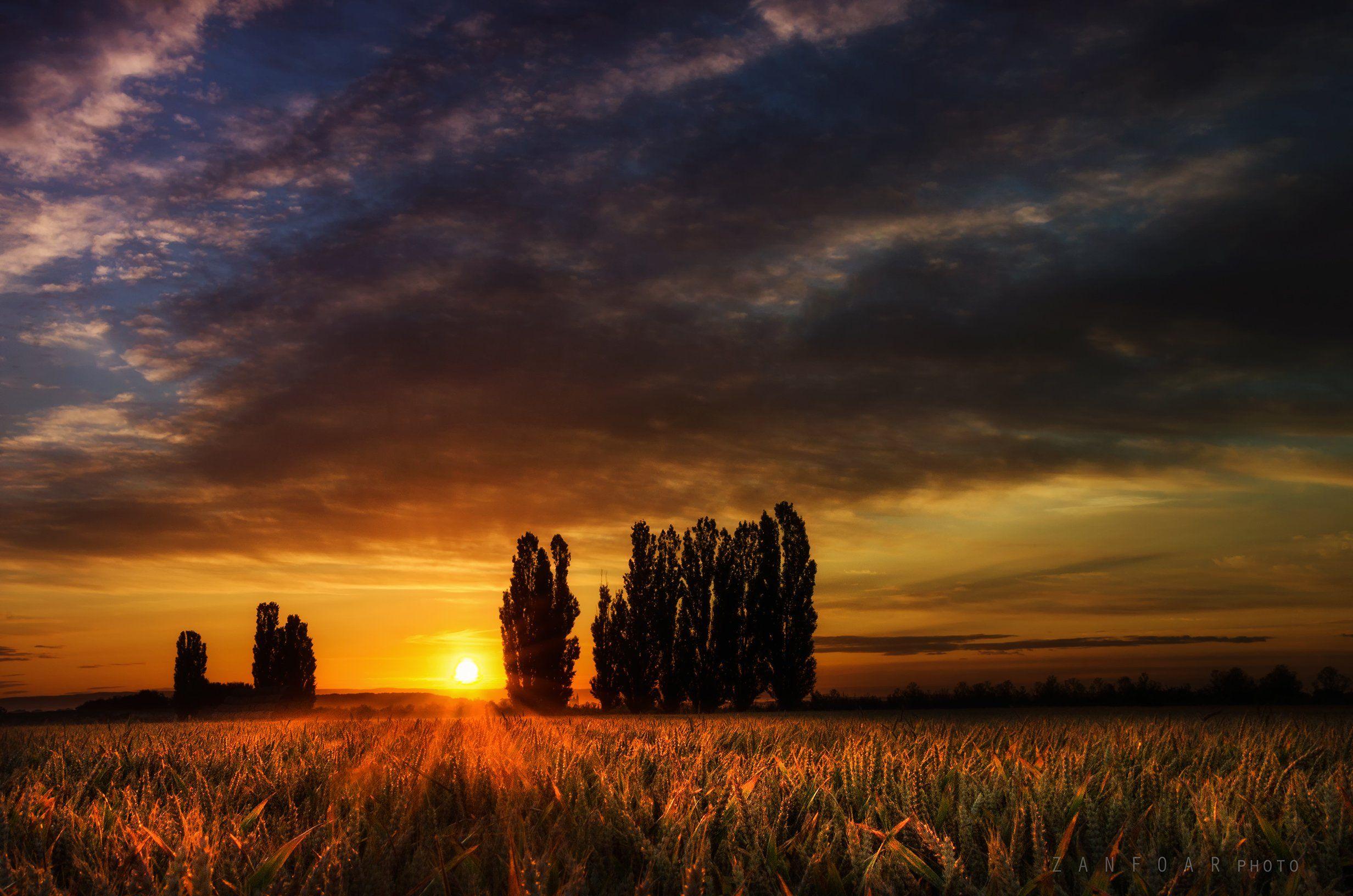 тополя, пейзаж, поле, природа, рассвет, зерно, лето, лучи, деревья, уши, zanfoar, чешская республика, nikon d7000,чехия, Zanfoar