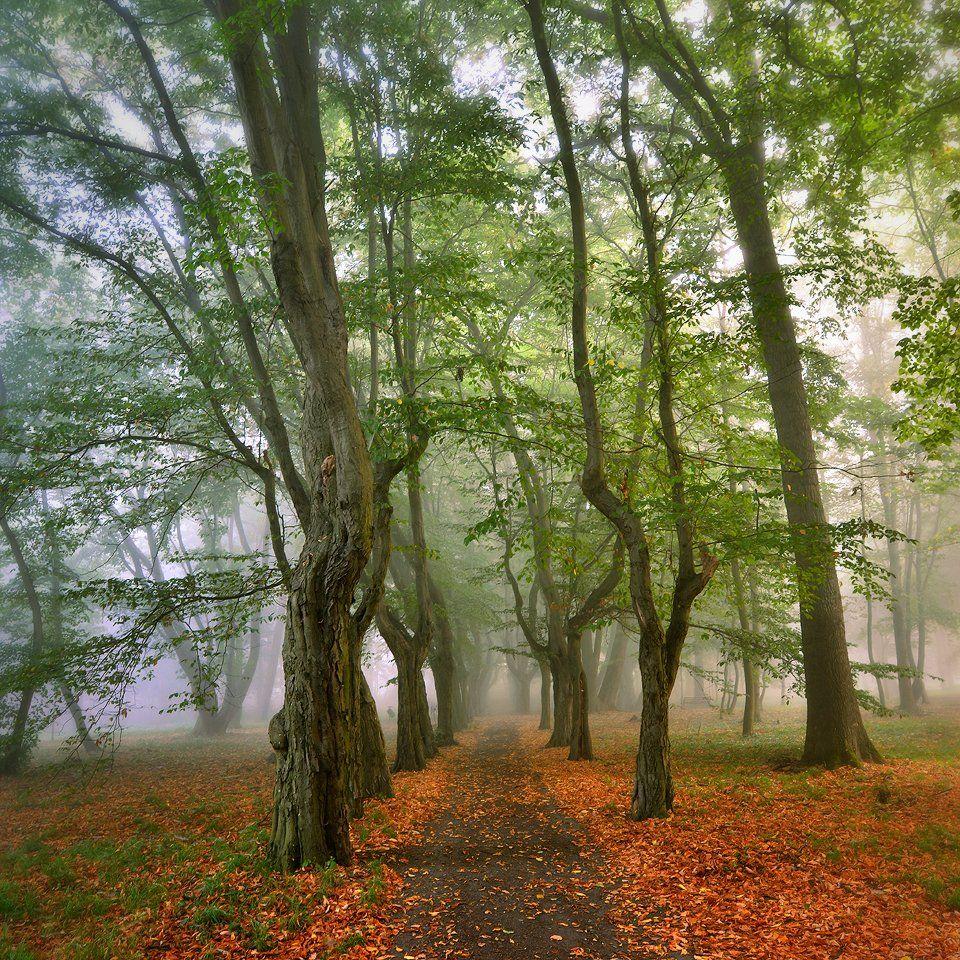 парк park path autumn spring tree trees poland dranikowski mist magic foggy green, Radoslaw Dranikowski