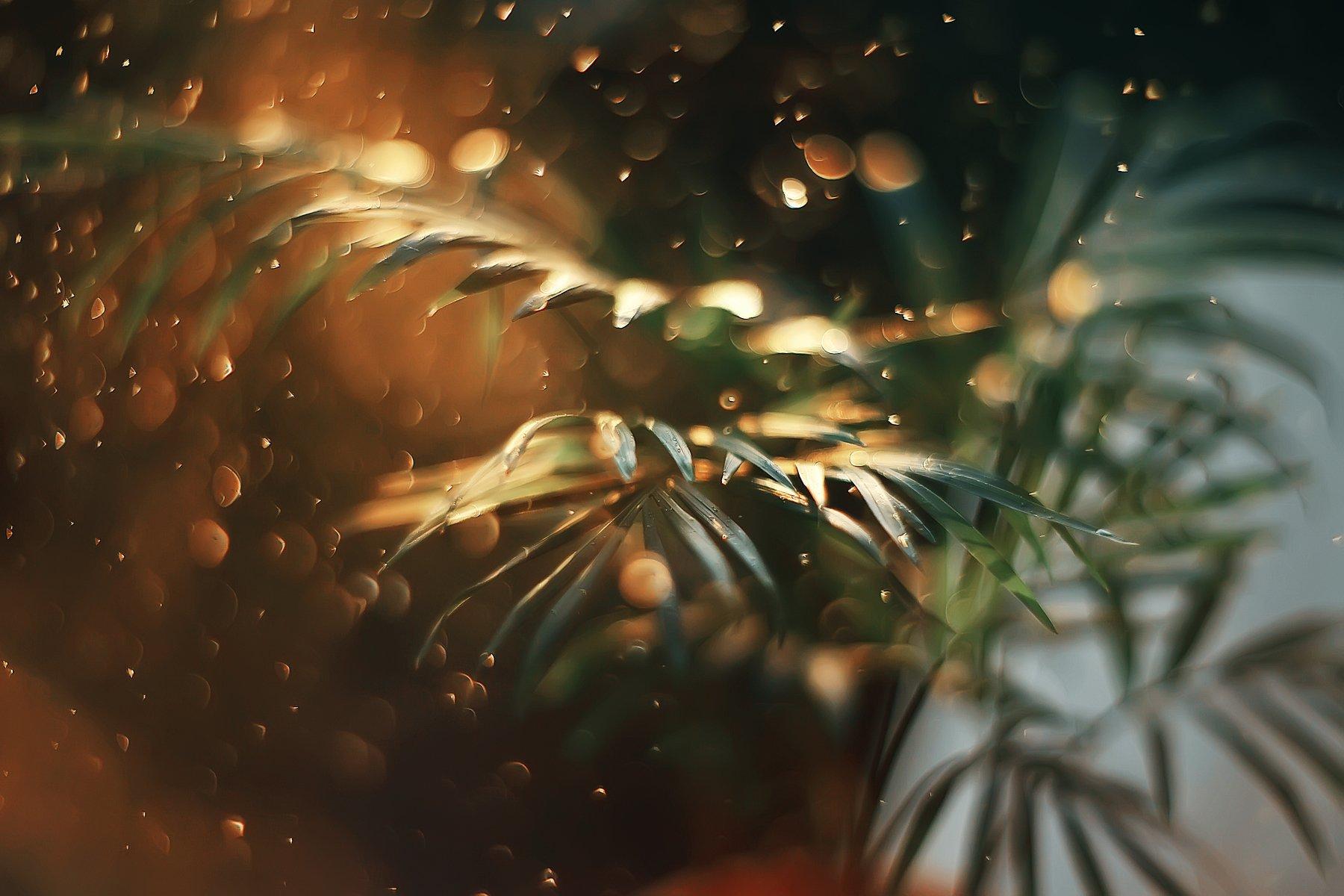 bokeh light green nature plants, Анастасия Колесникова
