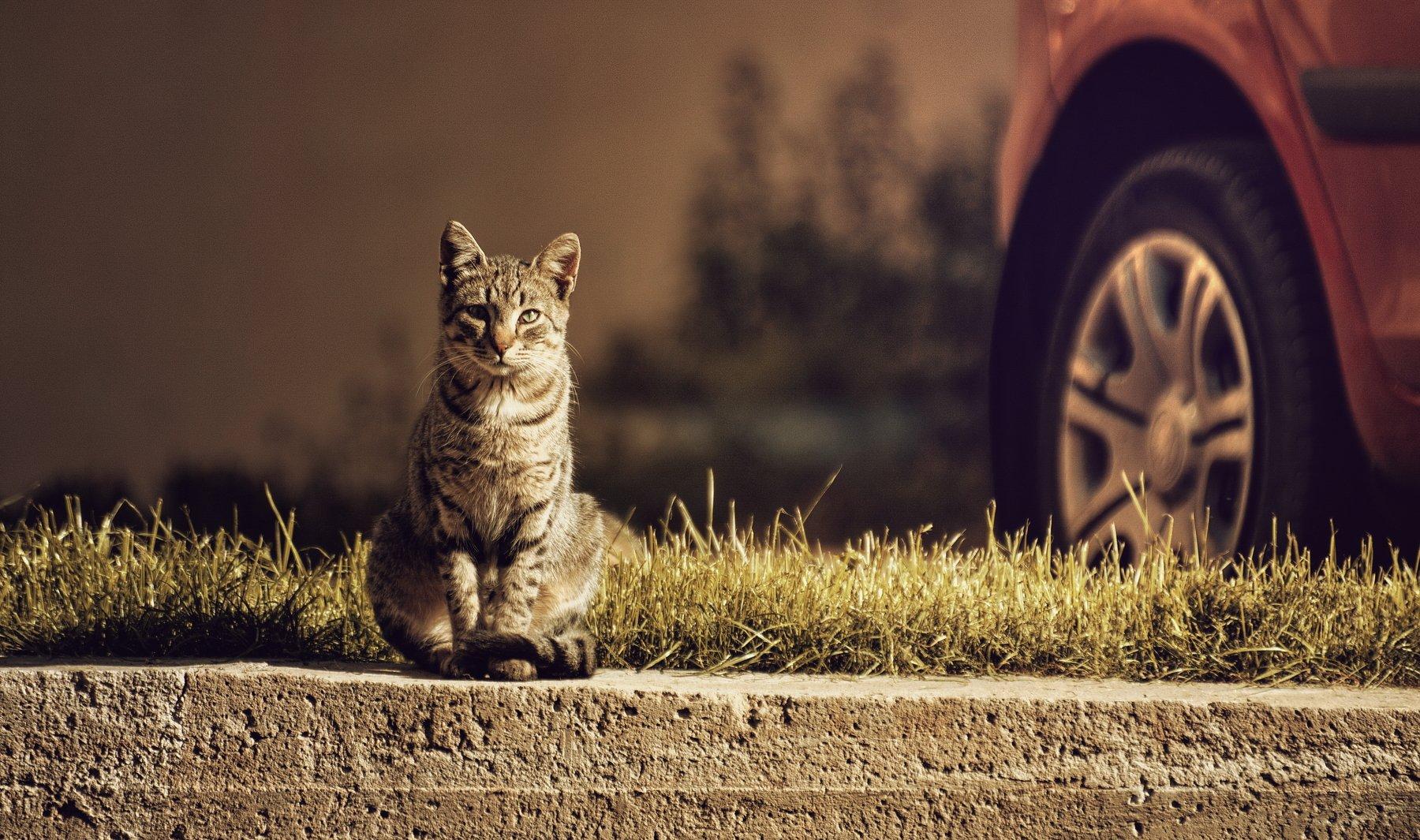 кот, коты, кошка, кошка, март, солнце, Vladimir Kedrov