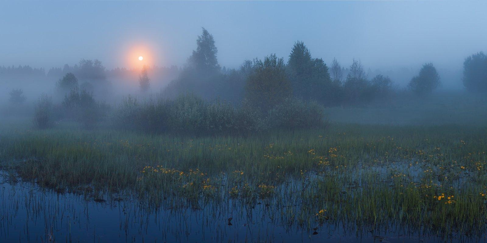 ленинградская область, ленобласть, болото, калужница, туман, Арсений Кашкаров