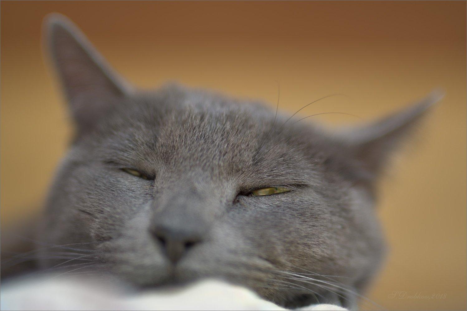 кошки, животные, фауна, Sergey Drobkov