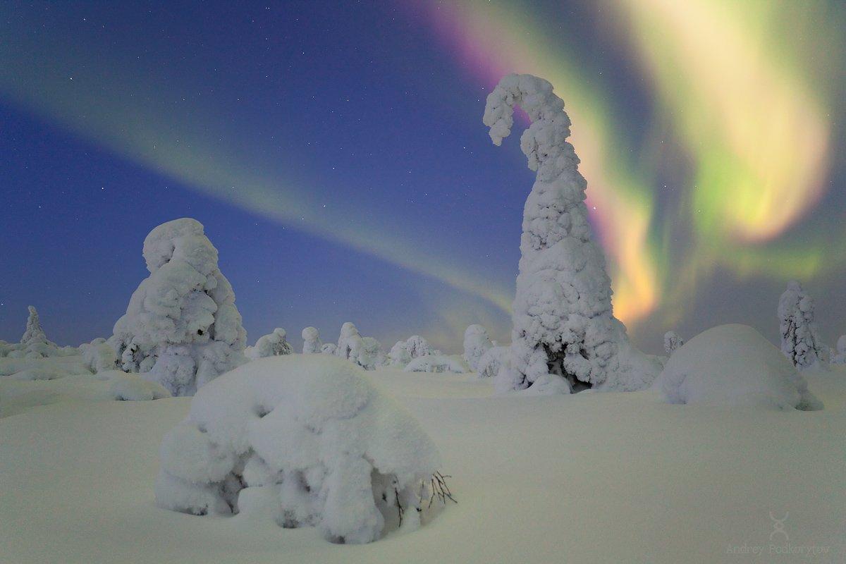 северное сияние, сияние, aurora, aurora borealis, borealis, подкорытов, podkorytov, Андрей Подкорытов