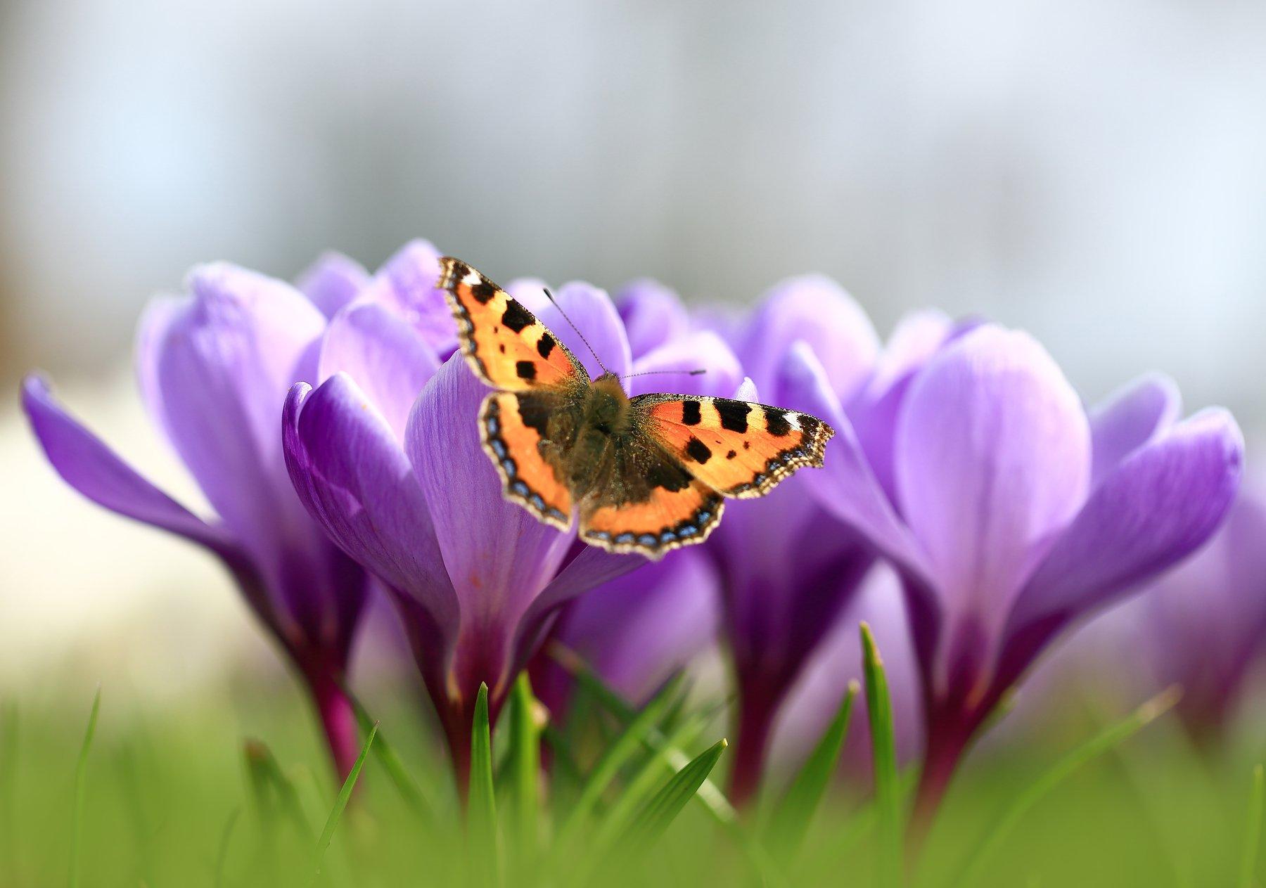Первые бабочки. Виктор Шнайдер