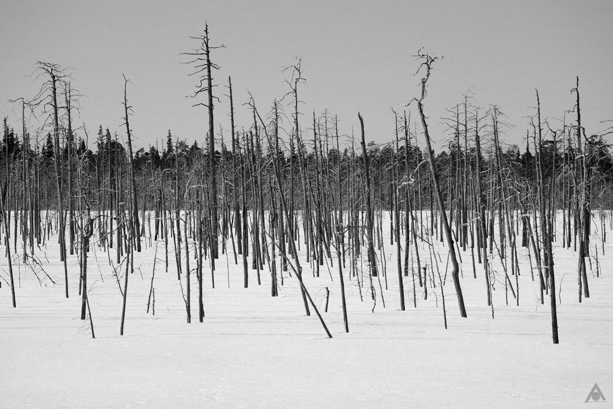 снег, болото, деревья, Аристова Ольга
