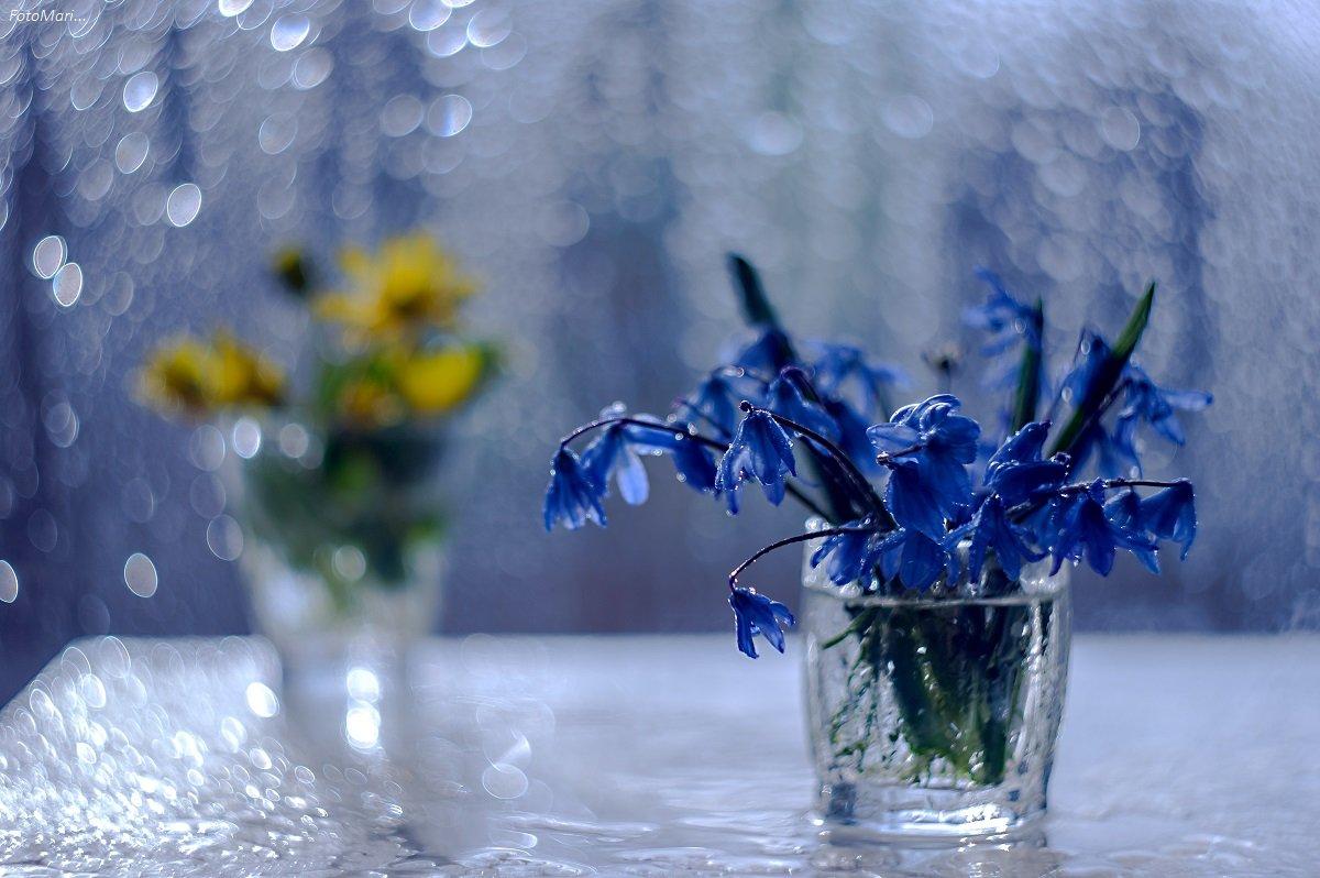 первоцветы,весна,натюрморт,взгляд, Марина Соколова