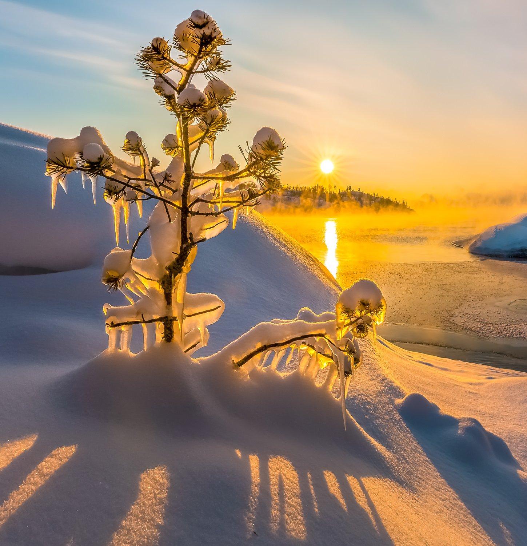 ладожское озеро, карелия, остров, зима, снег, фототур, лёд, шхеры, рассвет, сосна, наледь, солнце,, Лашков Фёдор