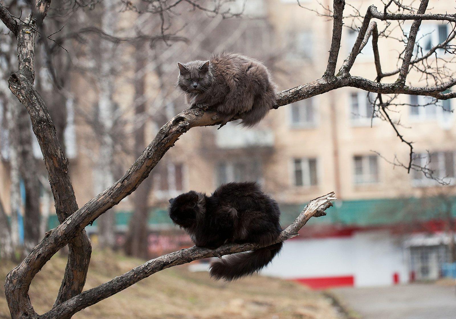 коты, животные, улица, Евгений Толкачёв