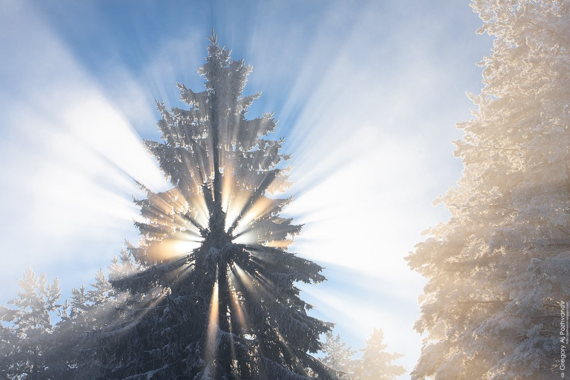 зима, февраль, туман, ёлка, солнце, лучи, свет, Григорий Пожванов