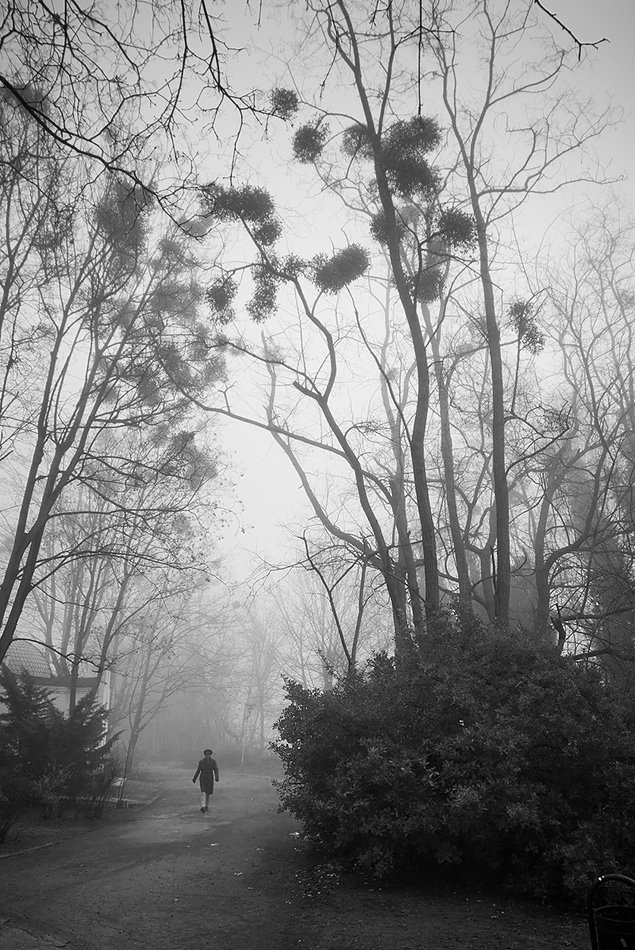 fog, varna, park, trees, Simeon Kolev