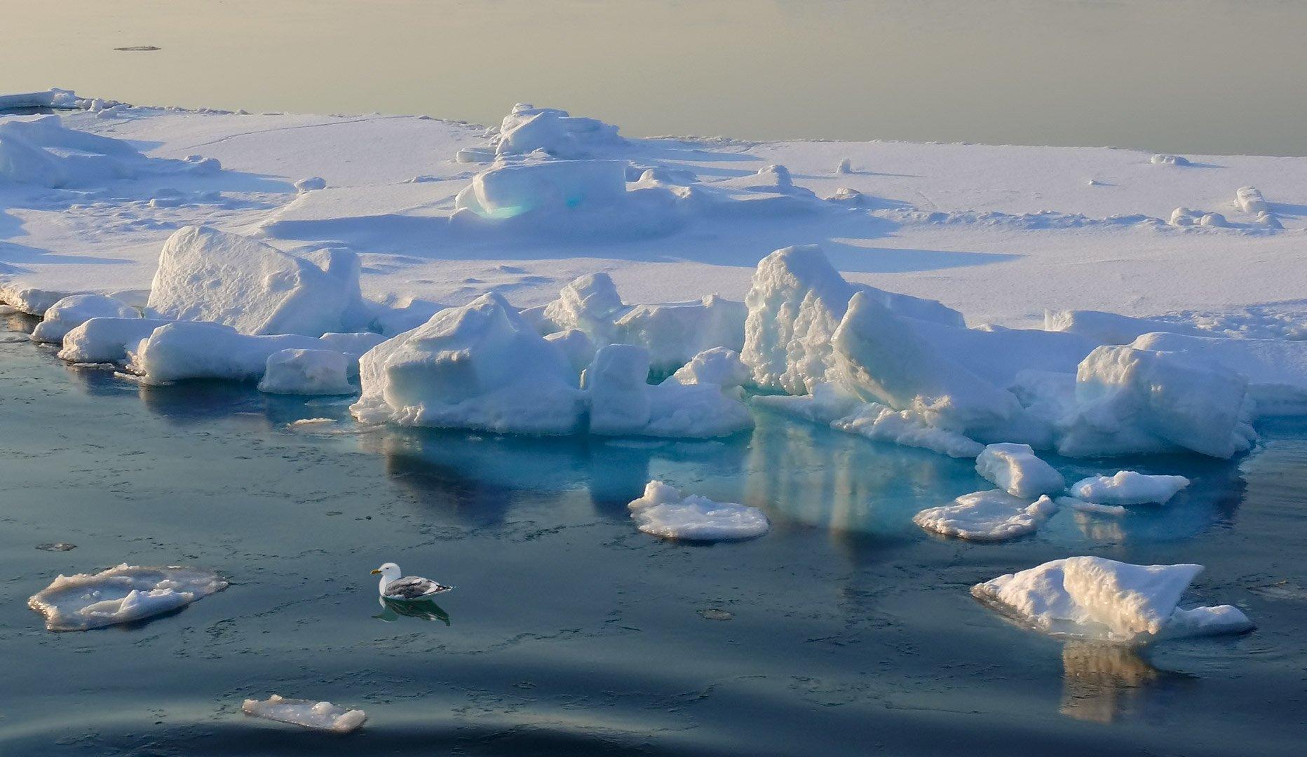 весна, охотское море, льдина, чайка, закатный свет, Евгений Паршуков