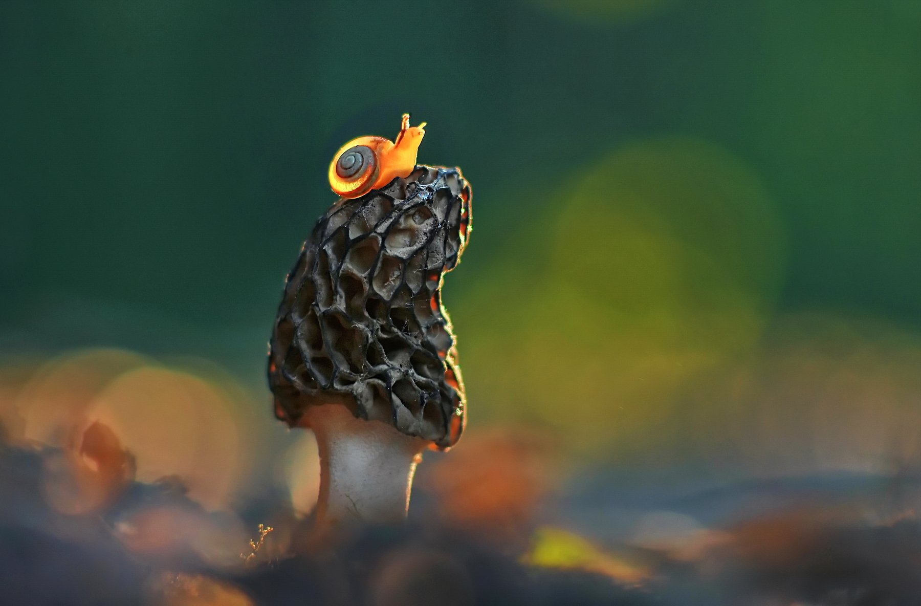 грибы, природа, улитка, весна, закат, Александр Гвоздь