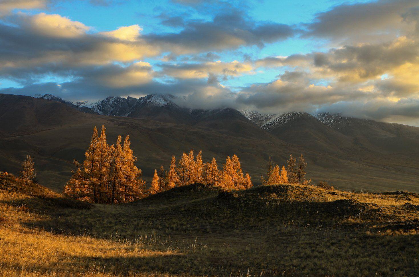 сибирь, алтай, горный алтай, курай, осень, курайский хребет, природа, пейзаж, горы, Галина Хвостенко