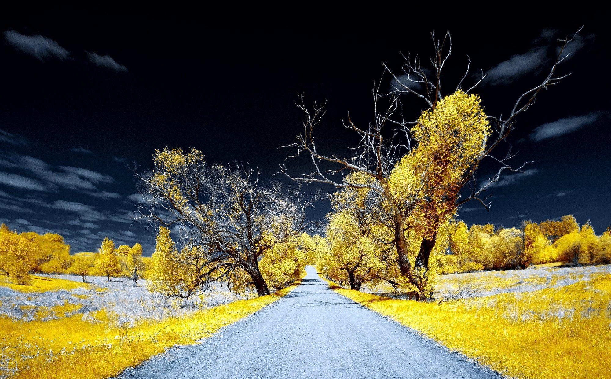 infrared,ик-фото,инфракрасное фото,инфракрасная фотография,пейзаж,природа,беларусь,весна,инфракрасная съемка, Sixten ( Сергей )