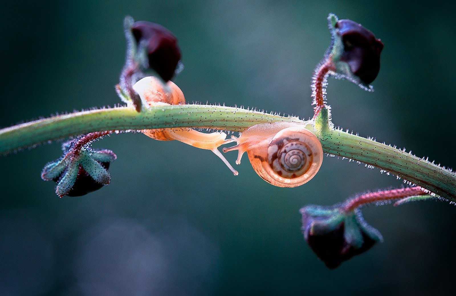 snails,snail,macro,beautiful,wild,wildlife,nature,faerie,close up,fairy,, Georgi Georgiev