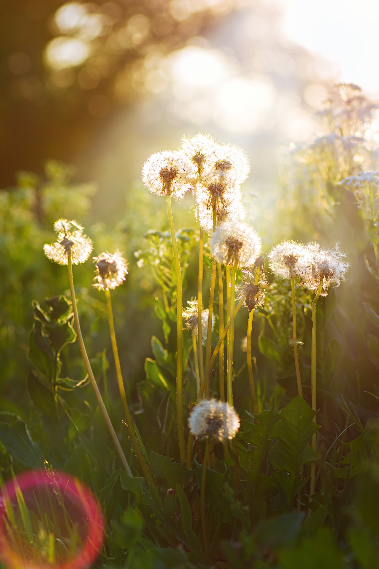 цветы,солнце,лучи,листья,трава,желтый,голубой, Котов Юрий