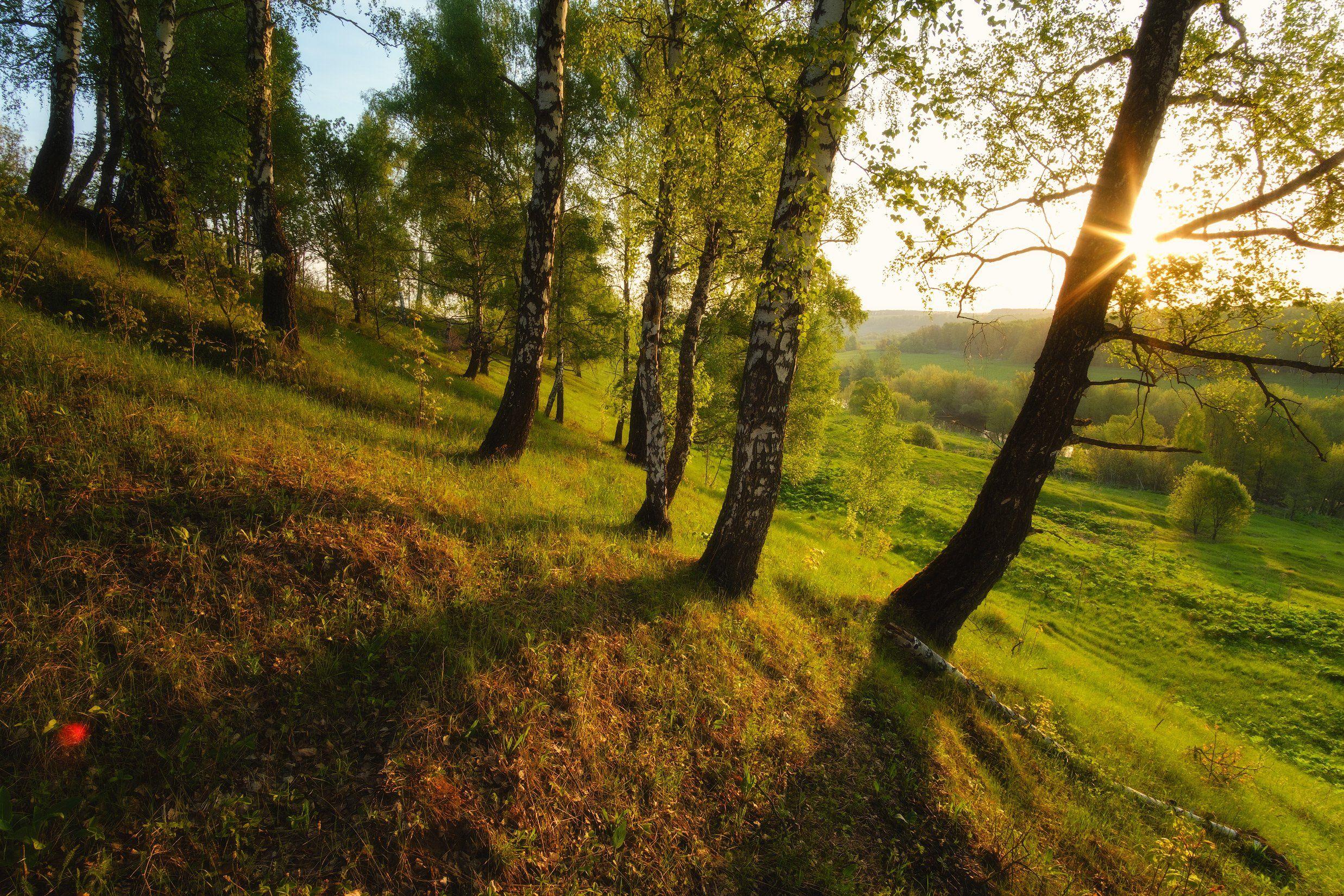 россия, московская область, зарайск, река, восход солнца, рассвет, луг, лес, весна, камни, пейзаж, природада, Оборотов Алексей