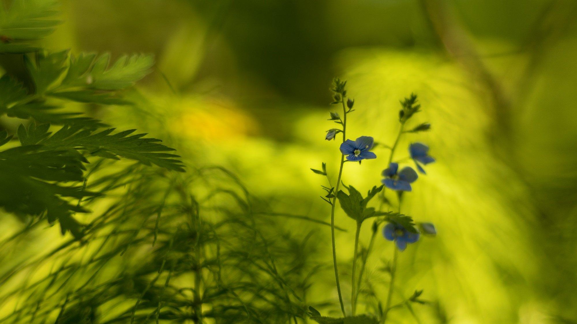 весна,природа,лес,беларусь, Sixten ( Сергей )
